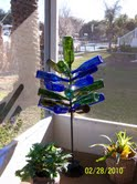 bottle tree.jpg